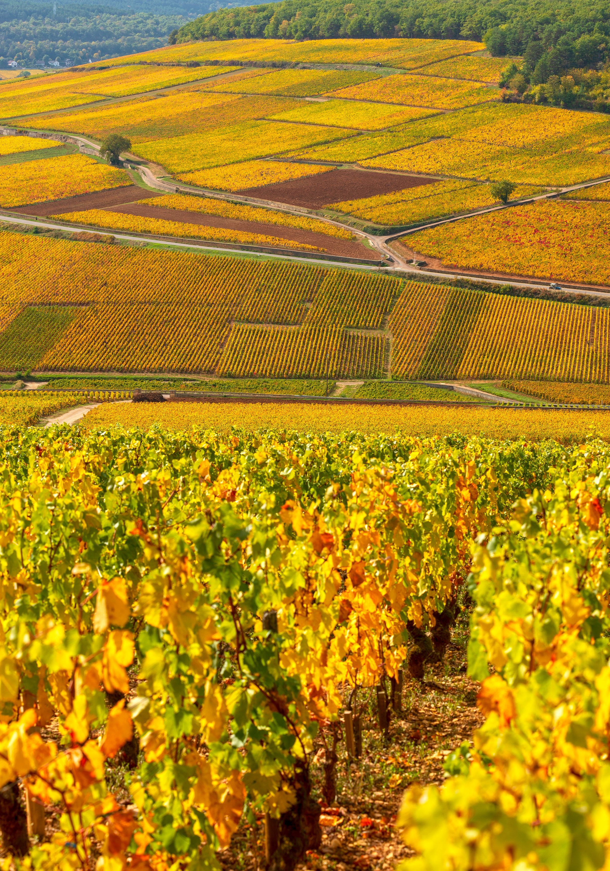 Vignobles de la Côte de Beaune