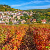 Vignobles de Pernand-Vergelesse