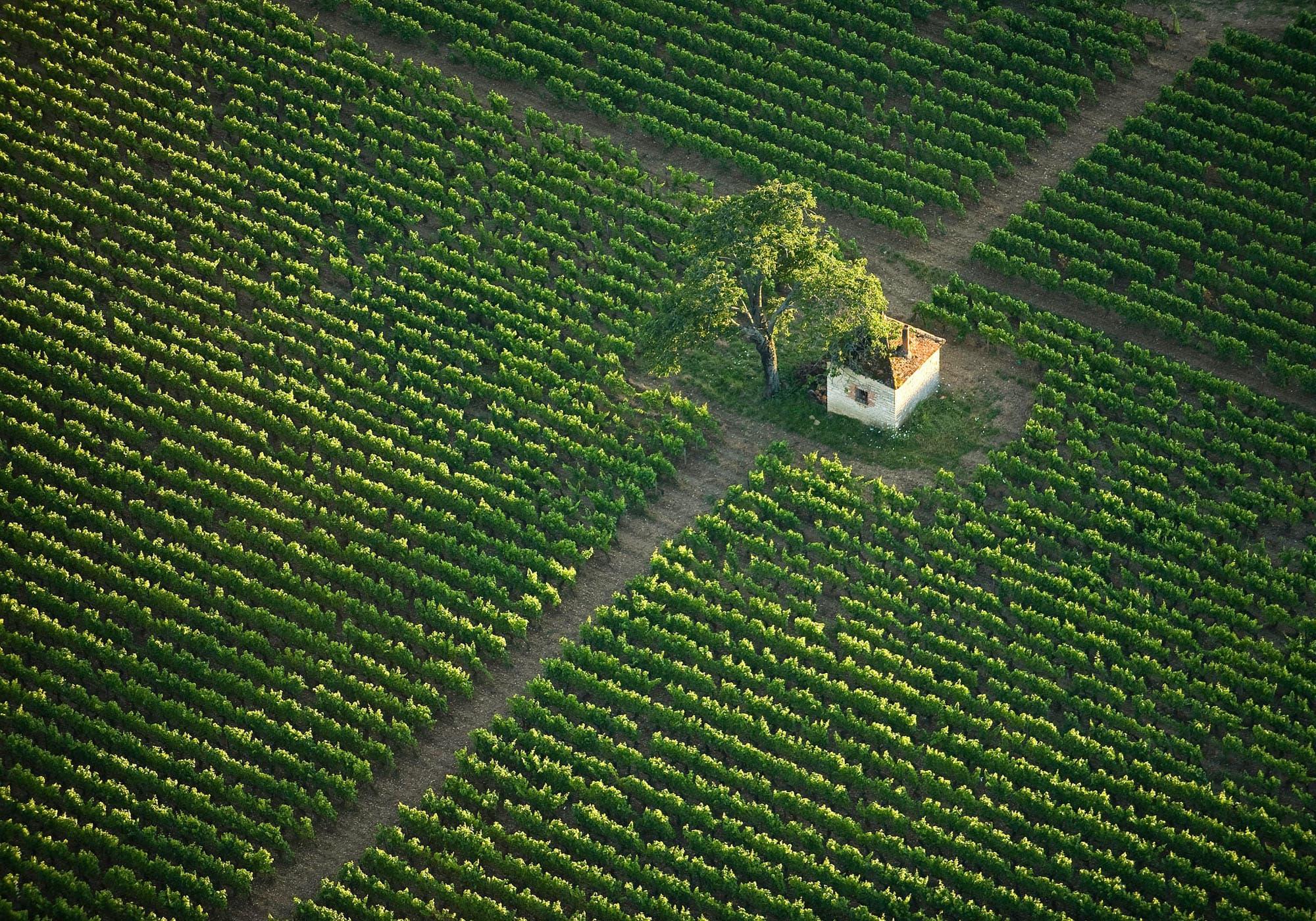 Parcelle de vignoble en Côte d'Or inscrite à l'UNESCO