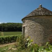 Cabotte dans les vignes à Savigny-les-Beaune