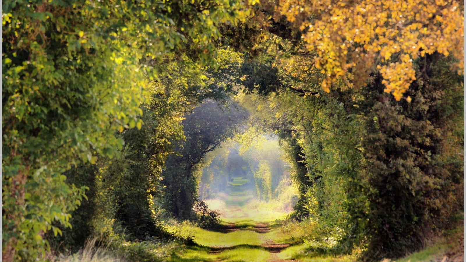 Chemin de sous bois en Puisaye