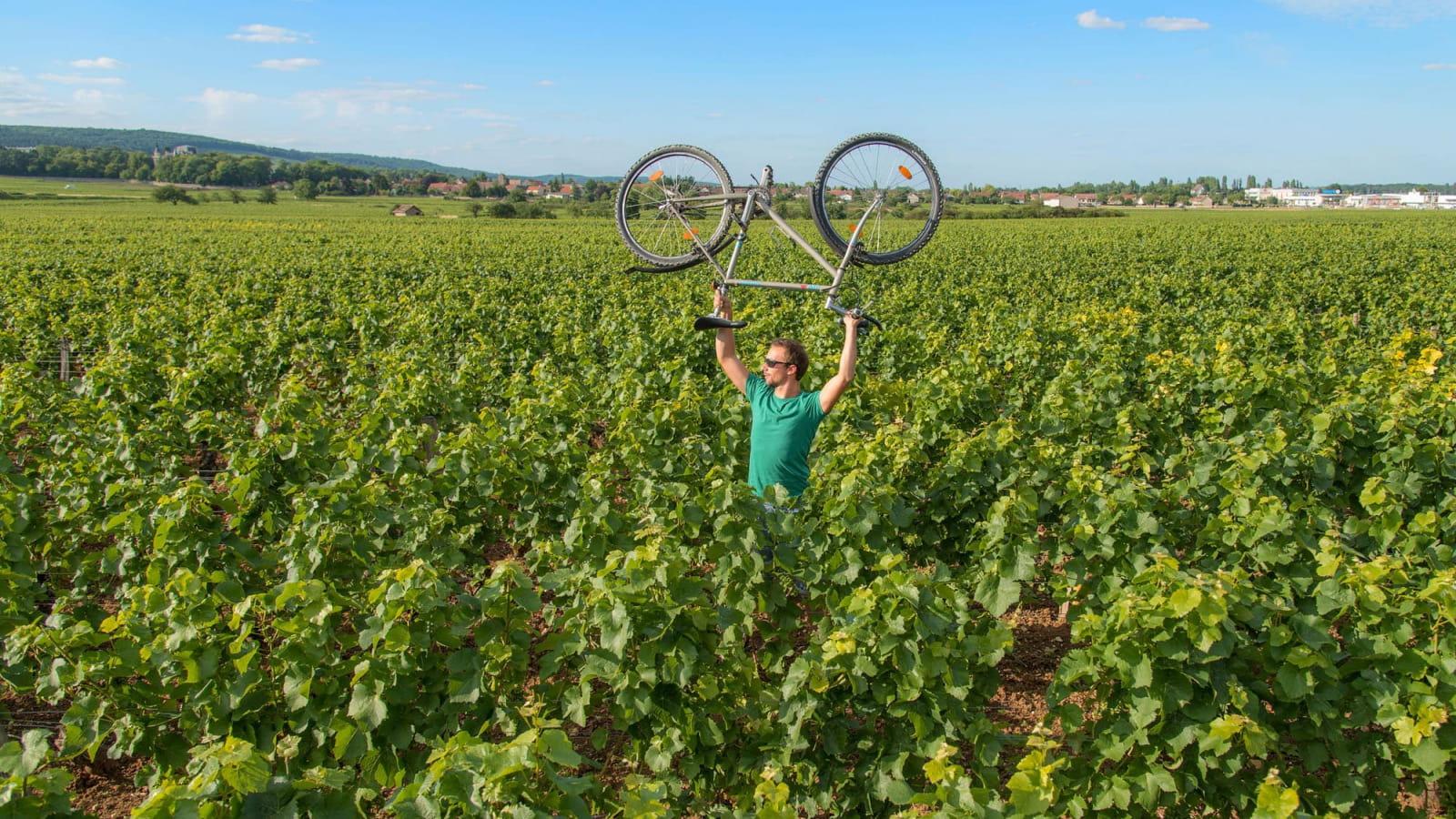 Cycliste dans les vignes