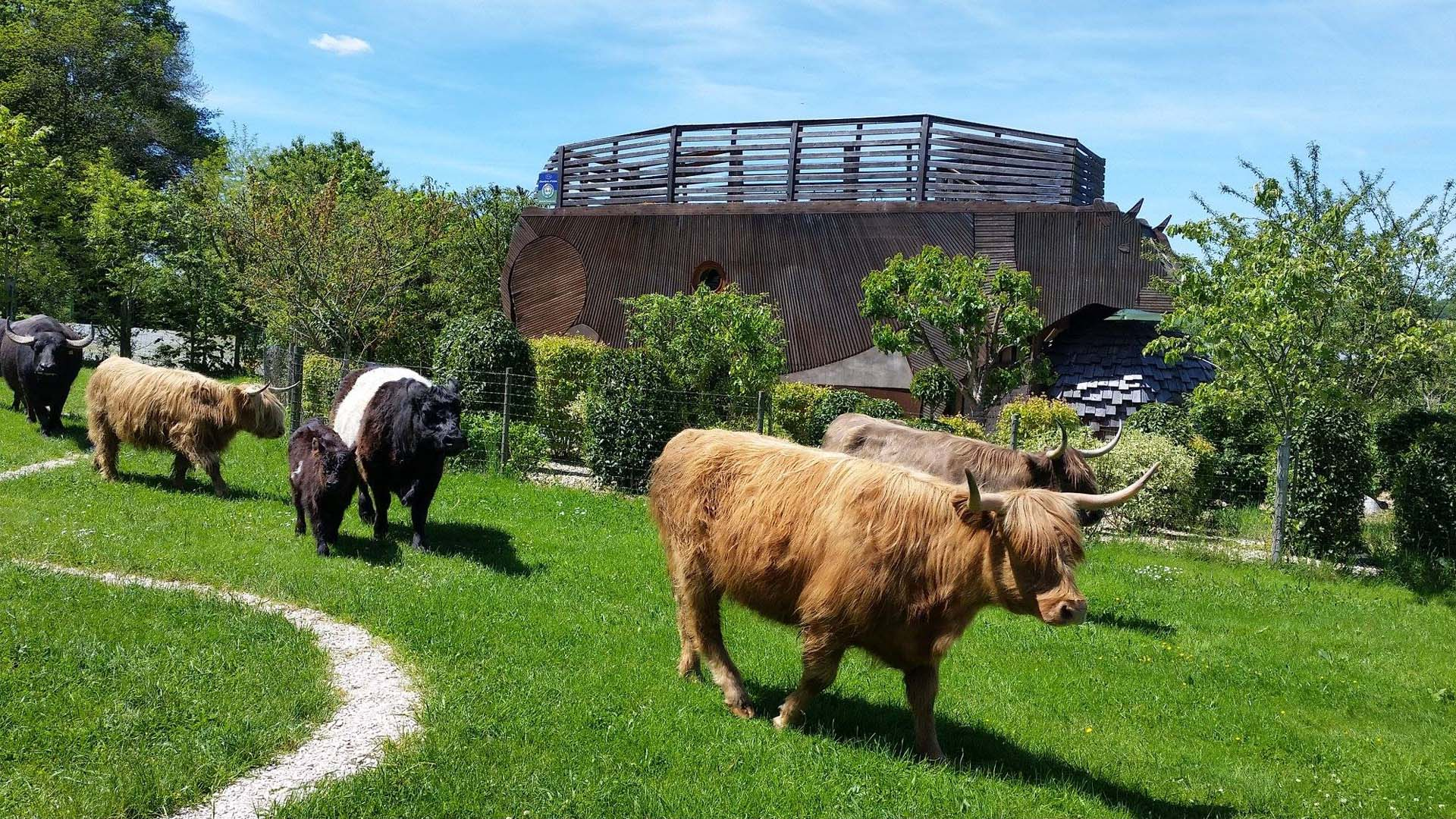 La Vache Ecolodge