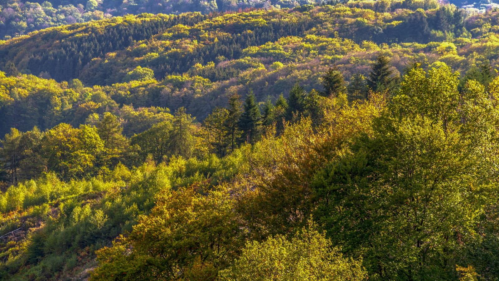Parc national de forêts dans le Châtillonnais