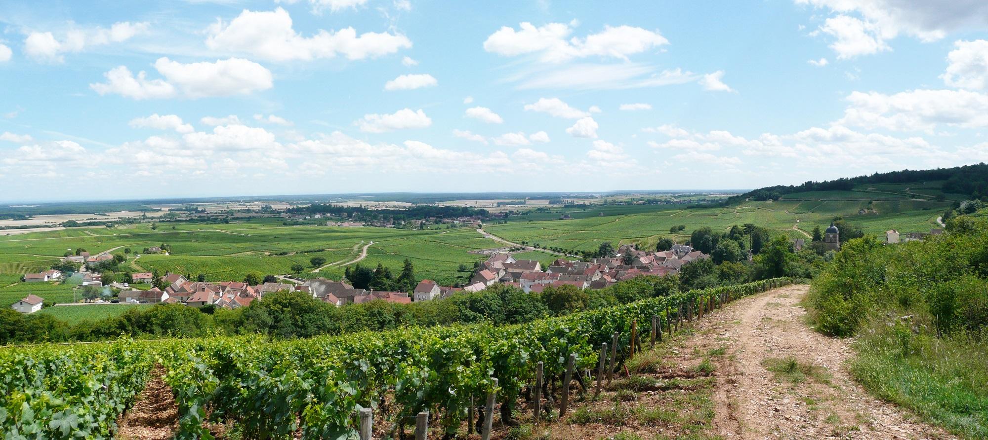 Point de vue sur les Climats de Bourgogne