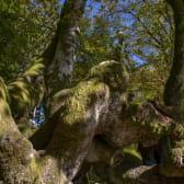 Forêt de Bibracte
