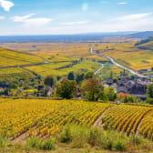 Vignoble de Pernand-Vergelesses