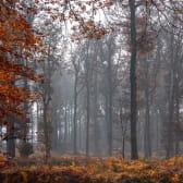 Balade en forêt à l'automne dans le Parc National des Forêts