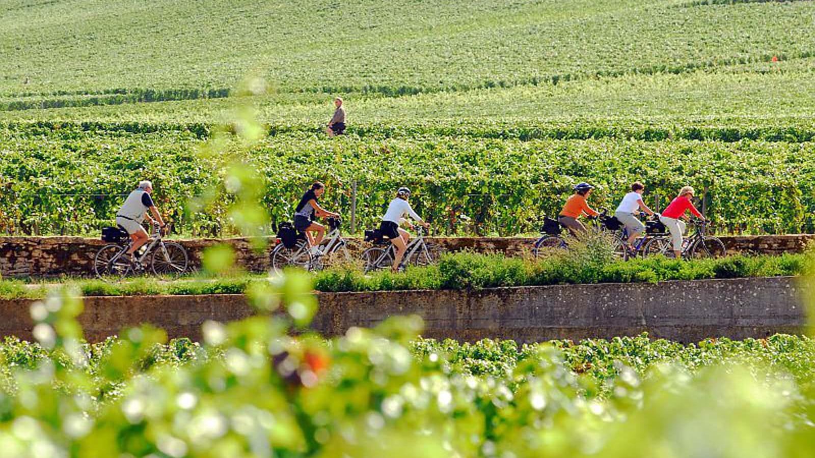 Véloroute dans le vignoble entre Dijon et Beaune