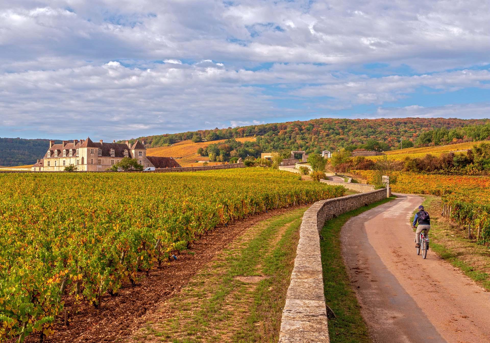 Vélo dans les Vignes en Bourgogne