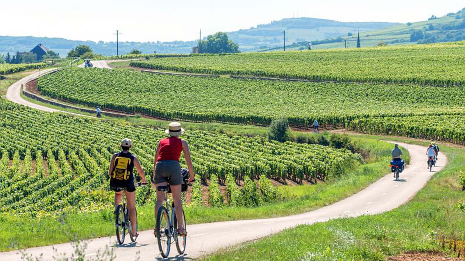 vélo sur la véloroute de la Route des Vignes