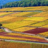 Petites routes au coeur des vignes de Bourgogne
