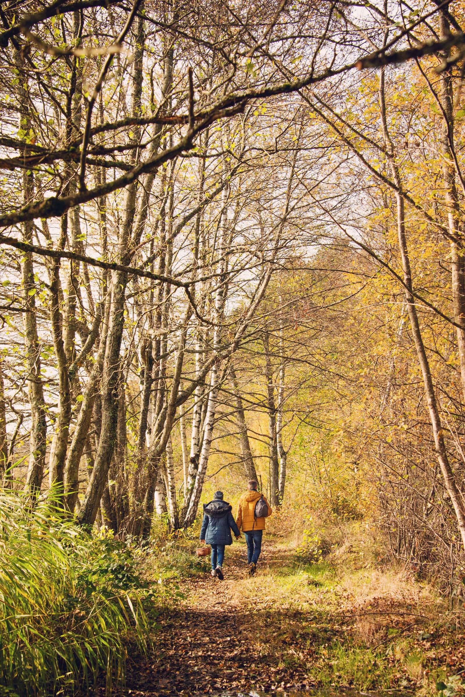 Balade en forêt dans le Morvan
